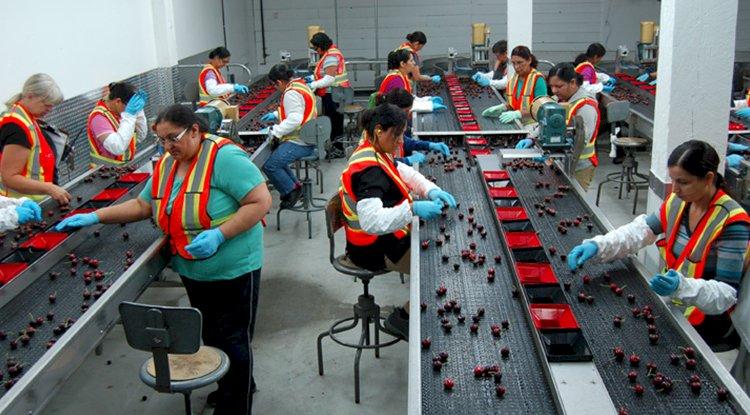 عمال تعبئة